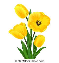 ramo, tulipán, flor