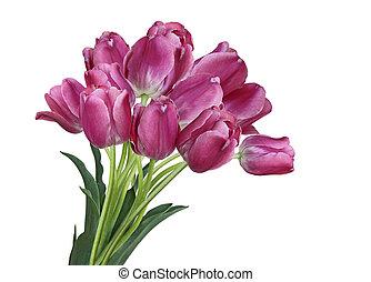 ramo, tulipán