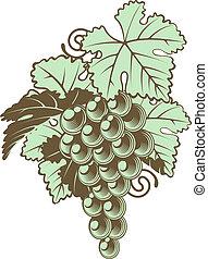 ramo uvas, en, vid