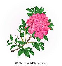 ramo, vetorial, mão, desenhar, rhododendron, flores côr-de-rosa, montanha, arbusto, vindima