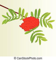 ramo, vindima, folhas, árvore, outono, vetorial, rowan, fundo, bagas