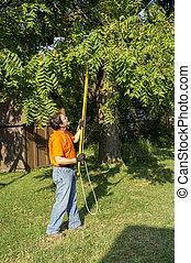 ramos, ao redor, árvore, linha telefone, aparando