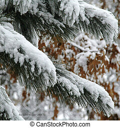 ramos, coberto, neve