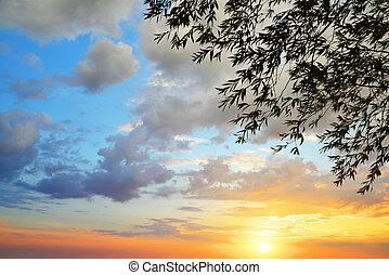 ramos, coloridos, sky., árvore, pôr do sol, silueta