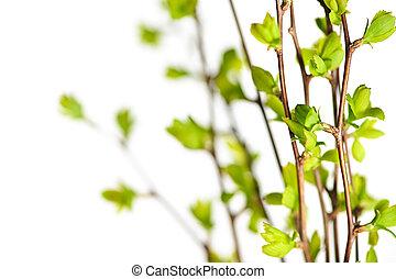 ramos, com, verde, primavera, folhas