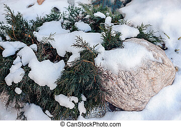 ramos, neve