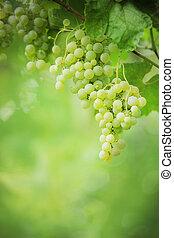 ramos, uvas