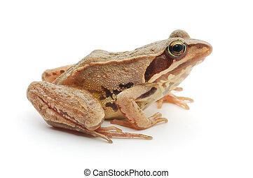 rana, marrón