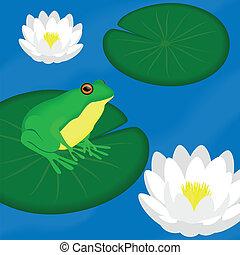 rana verde, sedere, su, uno, foglia, in, uno, stagno
