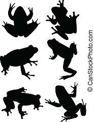 ranas, colección