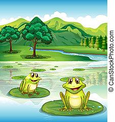ranas, dos, waterlilies, sobre