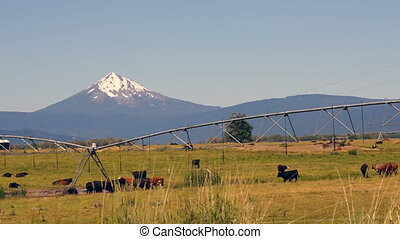 Ranch Livestock Graze and Fornicate with Diamond Peak...