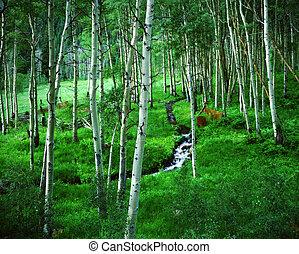 ranch, secteur, aspen colorado, désert, bosquet, bells ...