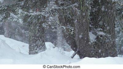 rand, schnee, winter, fallender , wald