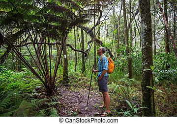 randonnée, dans, jungle
