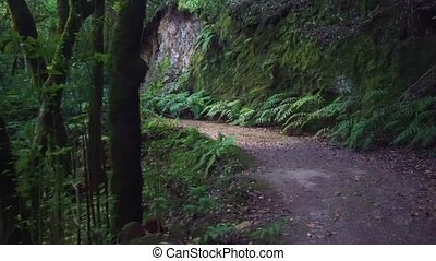 randonnée, forêt