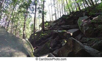 randonnée, pin, destination, montagnes., forêt, carpathian, ...