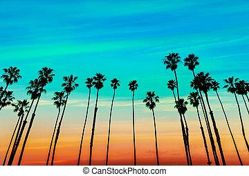 rangées, arbre, coucher soleil, santa, californie, paume,...