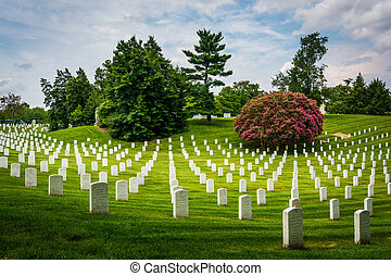 rangées, tombes,  Arlington, virginie, Cimetière,  national,  Arlington