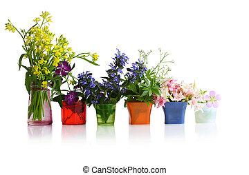 rang, de, fleurs