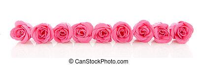 rang, rose, savon, roses