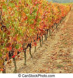 rang, vigne, usines, automnal, multicolore