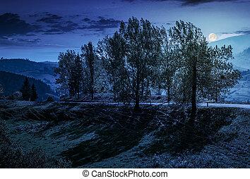 range of poplar trees by the road on hillside at night -...