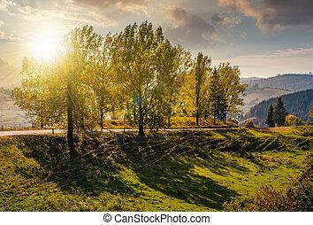 range of poplar trees by the road on hillside at sunset -...