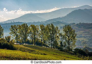 range of poplar trees by the road on hillside. beautiful...