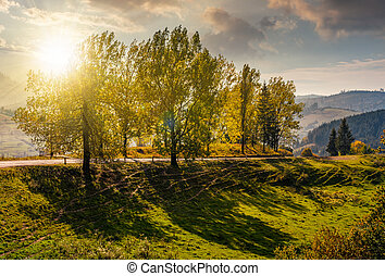 range of poplar trees by the road on hillside at sunset -...