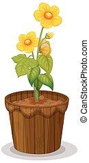 ranuncolo, fiori, fioriera, giallo