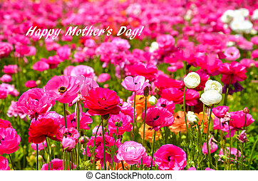 Ranunculus field - Happy mother's day concept