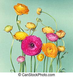 ranunculuson, arrangement fleur