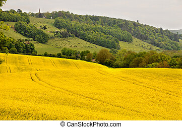 rape field and north downs way with view of St Barnabas...