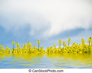 Rape field and water