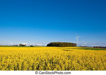 Rape field and wind turbine