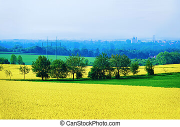 Rape plant field in Czech Republic
