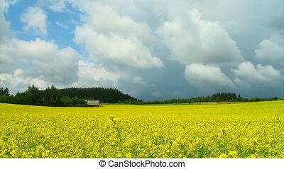rapese, Feld, aus, dramatisch, himmelsgewölbe