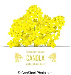 Rapeseed blossom flowers card. template copy space text. ...