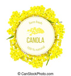 Rapeseed blossom flowers. Card template text. Round Circle ...