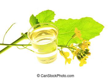 rapeseed (Brassica napus) - flowering oilseed rape before...