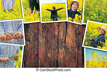 rapeseed, campo, e, agricultor, foto, colagem