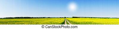 rapeseed, campo, em, a, bonito, springtime.