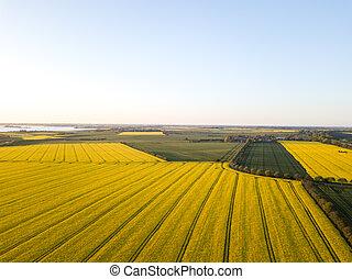 Rapeseed Field Aerial View