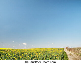 Rapeseed field under blue sky with countryside road