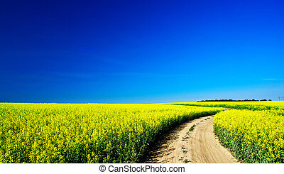 Countryside road and golden field of rapeseeds.