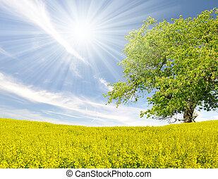 rapeseed field  - spring tree in the rapeseed field