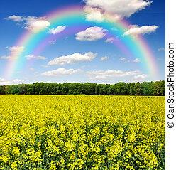 rapeseed field with rainbow