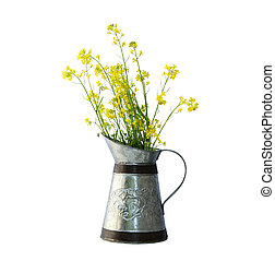 Rapeseed flower in a pitcher