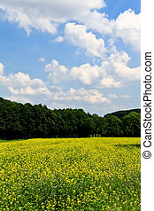 Rapeseed in front of a forest